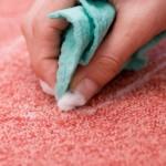 Clean Pet Vomit From Carpet San Antonio TX